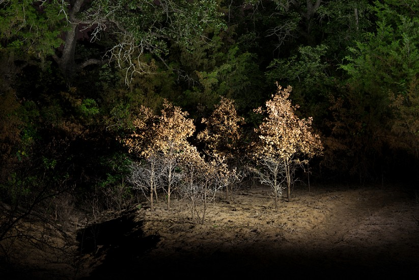Dornith Doherty, Copse 2018, Archival Pigment Print on Paper, Edition 1/3