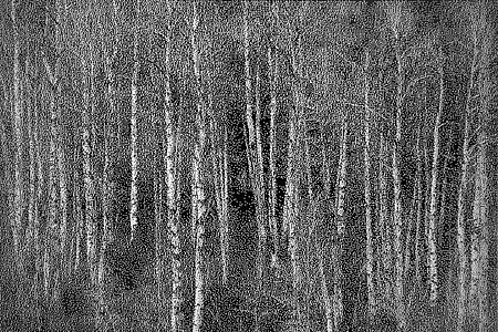 William Betts ,   Aspens  ,  2012     Acrylic paint on reverse drilled mirror acrylic; Ed. 2/3 ,  48 x 71 in.     WBE-138